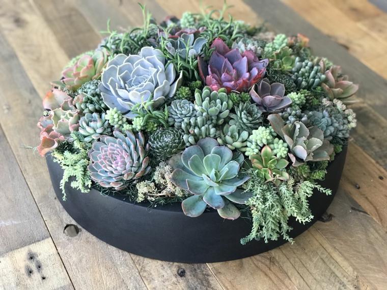 vaso tondo e basso con succulente piante da appartamento poche cure