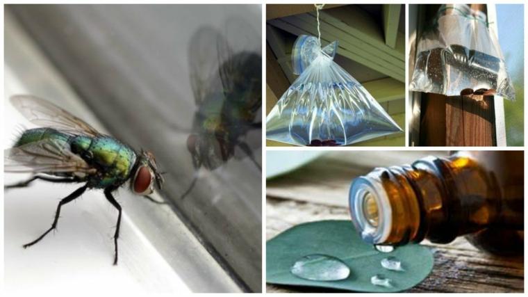 come allontanare le mosche rimedi con sacchettino di acqua