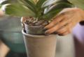Come curare le orchidee in casa: farle rifiorire è molto semplice!