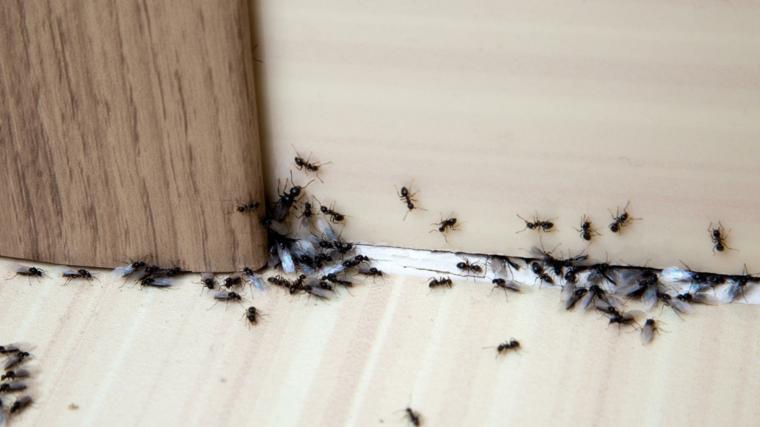 come eliminare le formiche porta di legno con piccoli insetti