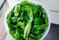 Come raccogliere il basilico, conservarlo e utilizzarlo quando necessario!