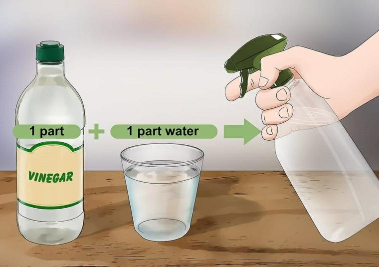 ingredienti per rimedi contro le formiche aceto e acqua in uno spruzzino
