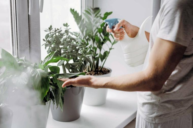 piante antimosche donna che spruzza i vasi di piante sul davanzale