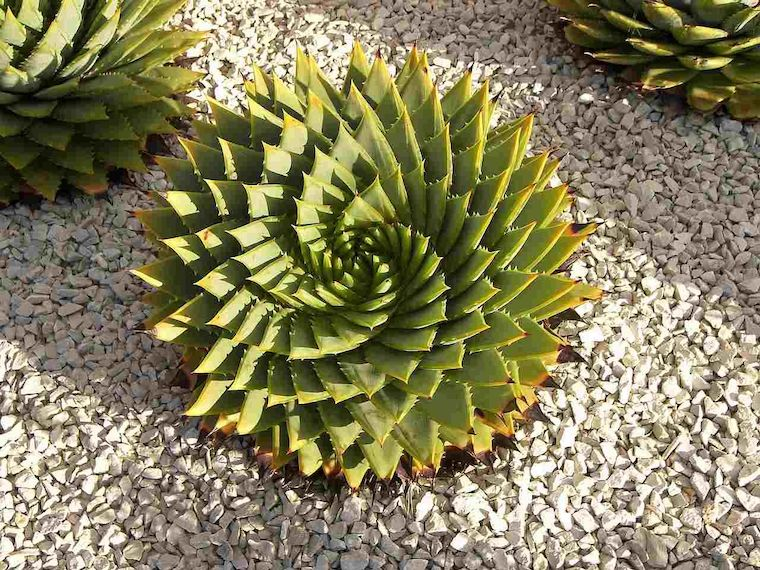 piante da esterno resistenti al sole e al freddo giardino roccioso