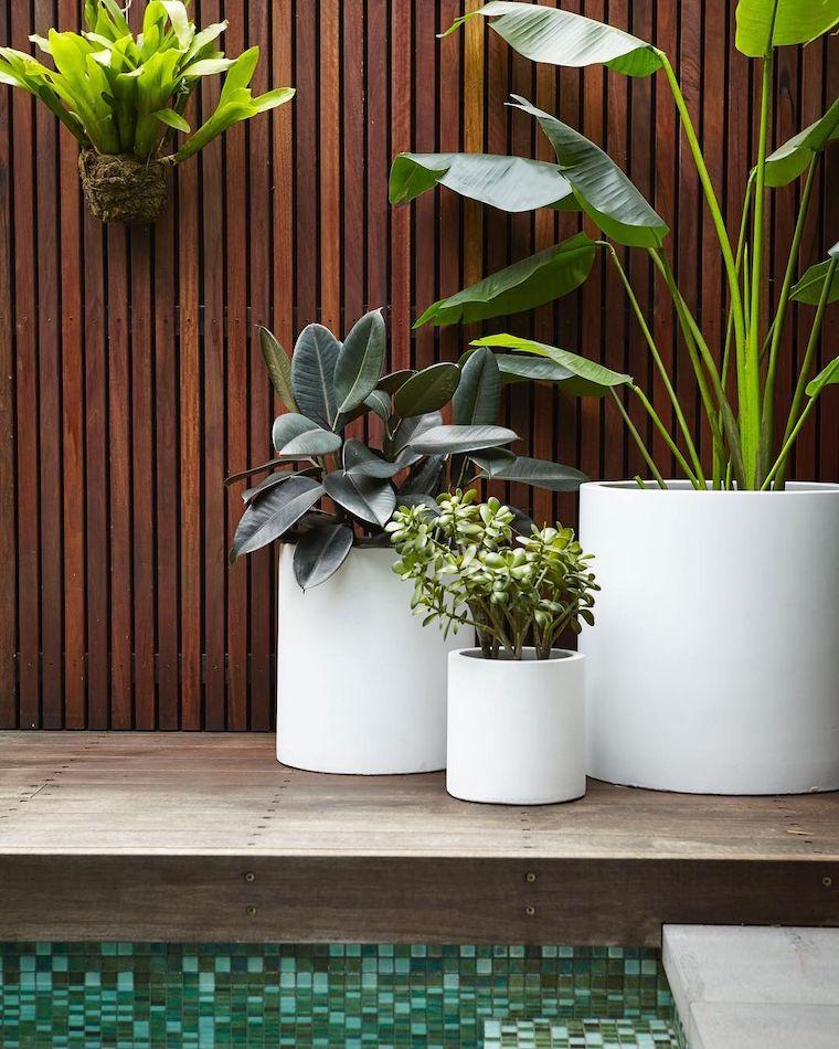 piante da esterno resistenti al sole e al freddo vasi con piante sempreverdi