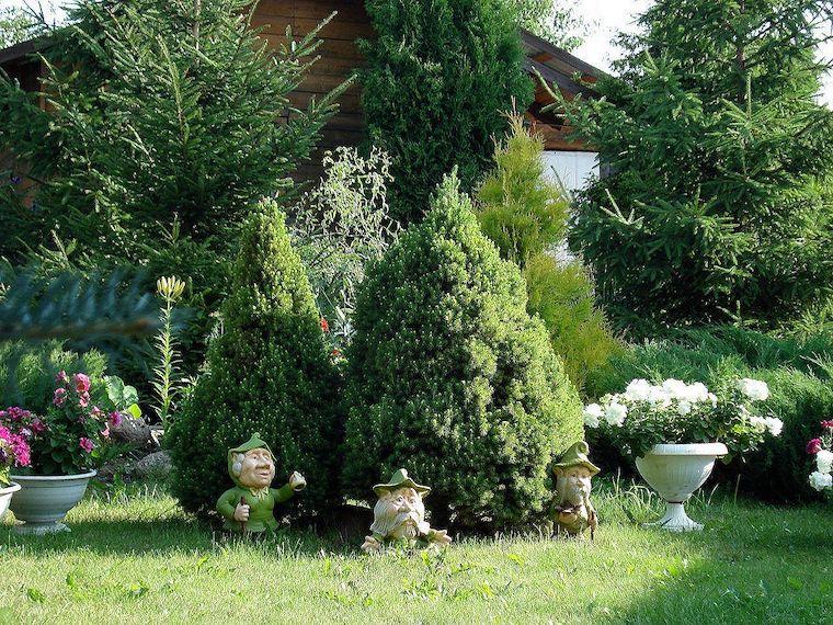 piante da giardino perenni che fioriscono nani da giardino