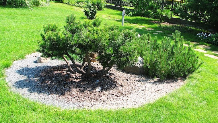 piante perenni sempreverdi giardino con prato verde aiuola con alberi