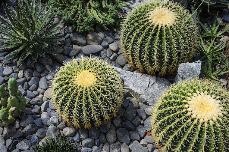 piante perenni sempreverdi giardino roccioso con cactus