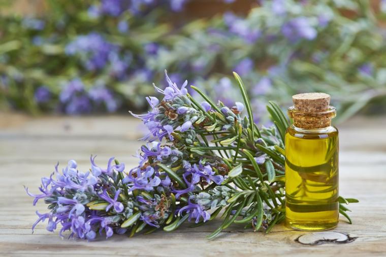 rimedi naturali contro le mosche mazzetto di lavanda olio essenziale