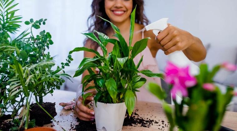rimedi naturali per eliminare le formiche dalle piante in vaso
