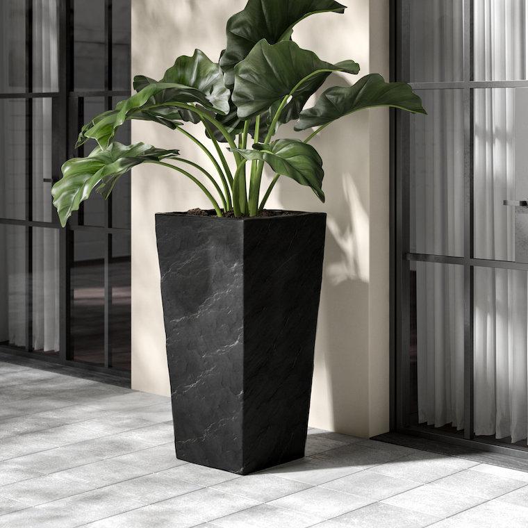 vaso grande da esterno pianta dalla foglia verde piante perenni da giardino