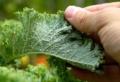 Rimedi naturali contro gli afidi: come mettere al sicuro le tue piante!