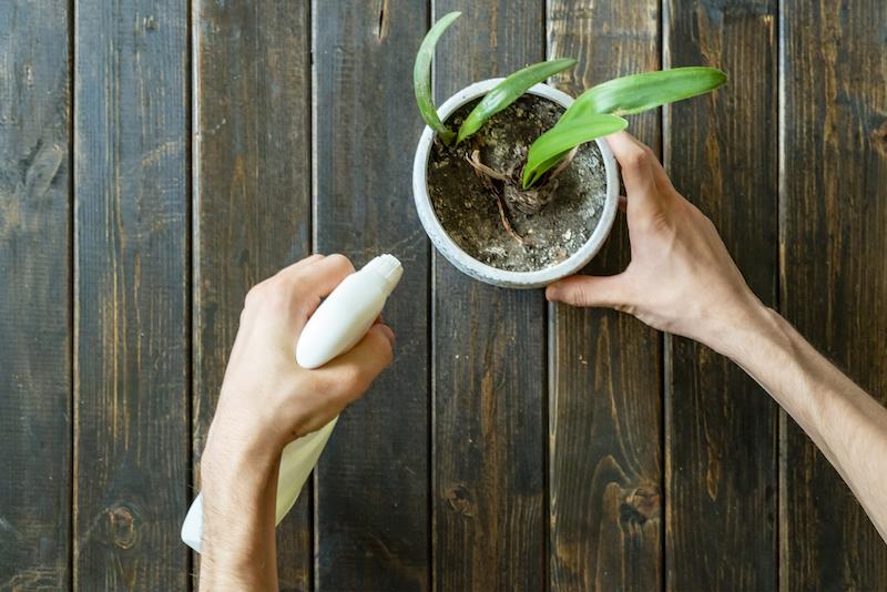come eliminare i moscerini dalle piante in casa