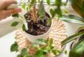 Come eliminare i moscerini dalle piante con metodi del tutto naturali!
