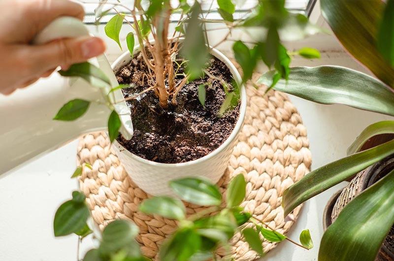 perché si formano moscerini nelle piante