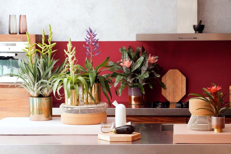 bromelia piante da appartamento facile cura