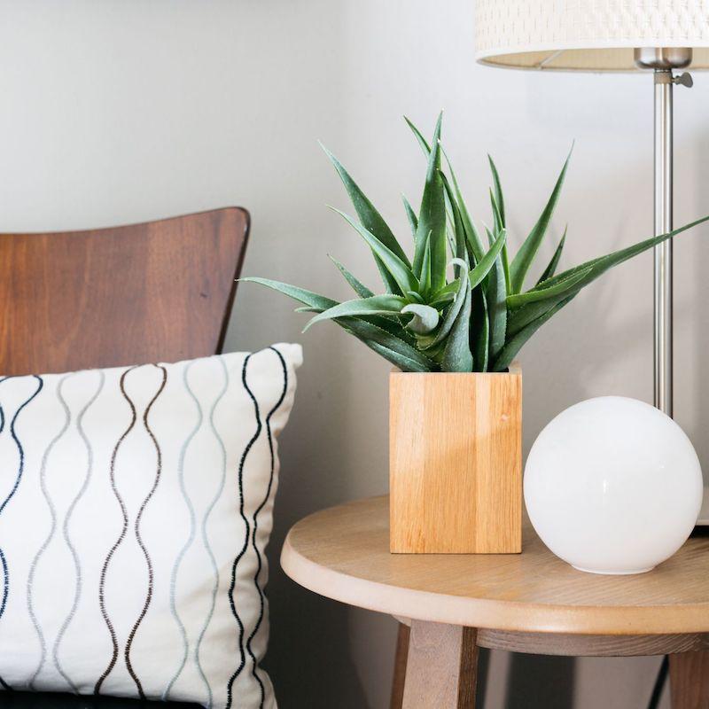 aloe vera piante eleganti da appartamento