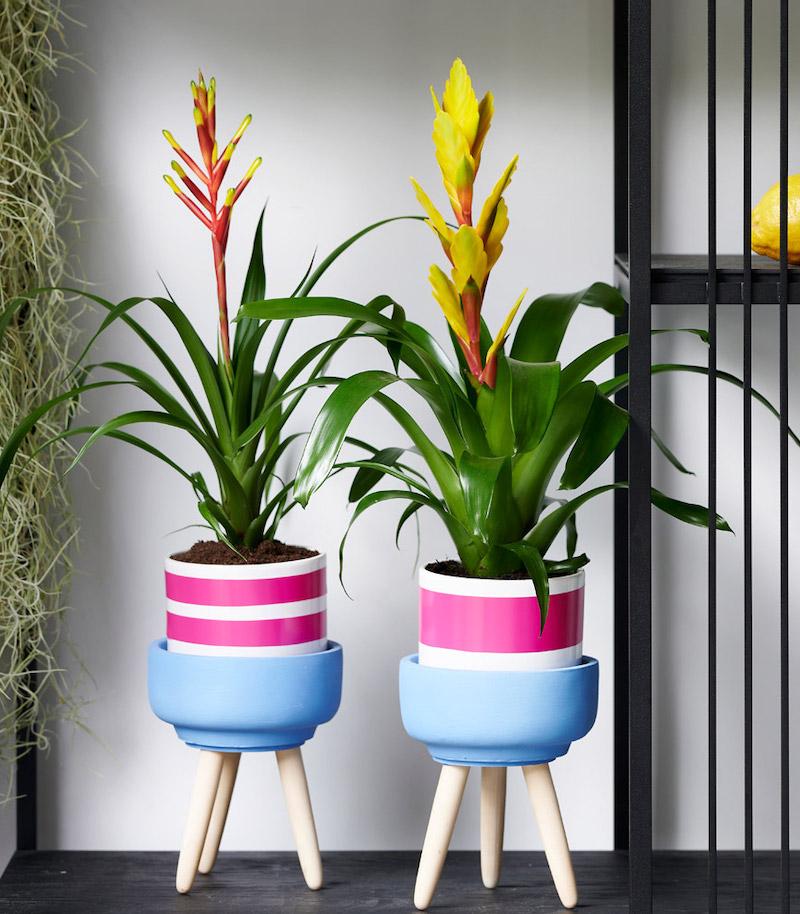 bromelia vriesea piante da interno resistenti