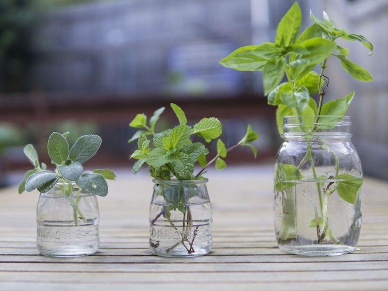 coltivazione in casa di piante aromatiche