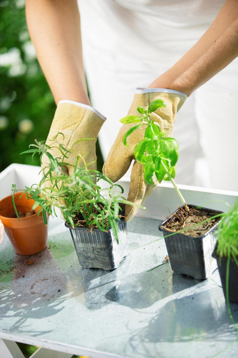 coltivazione piante aromatiche