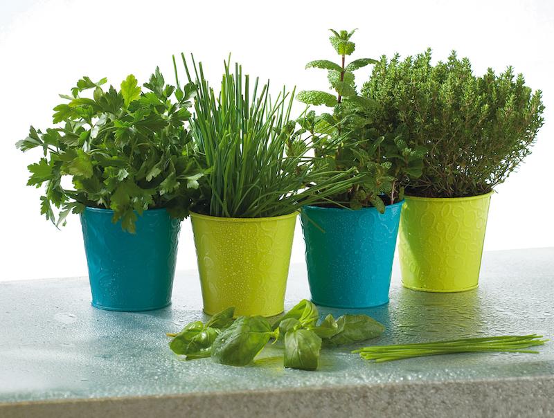 composizione di piante aromatiche in vaso