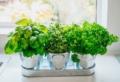 10 errori da evitare per coltivare con successo le piante aromatiche in vaso!
