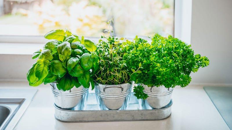 composizione piante aromatiche in vaso