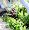 cosa piantare a settembre ravanelli