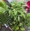 esposizione solare delle piante aromatiche
