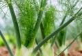 Cosa piantare a settembre nell'orto del giardino e sul terrazzo!