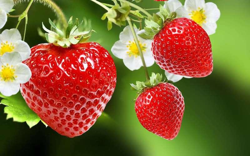 orto da fare a settembre trapiantare fragole