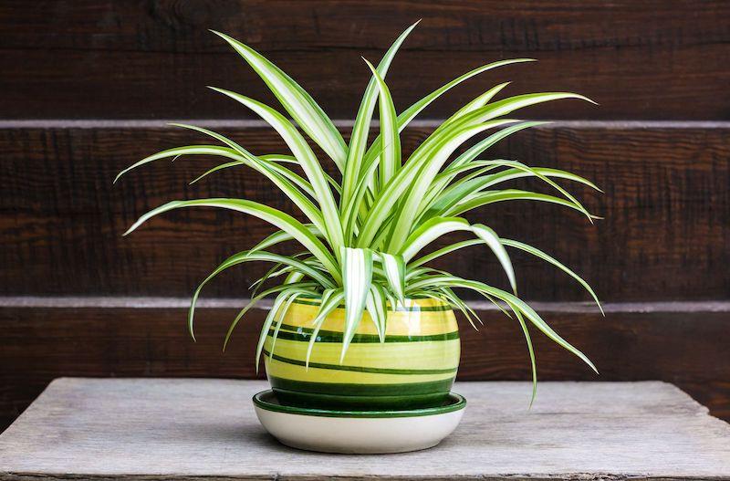 pianta da appartamento con foglia verdee