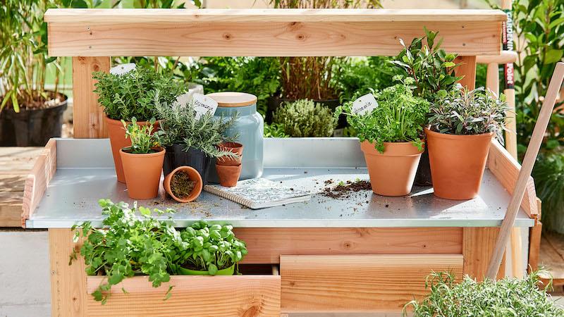 quali piante aromatiche possono stare al sole