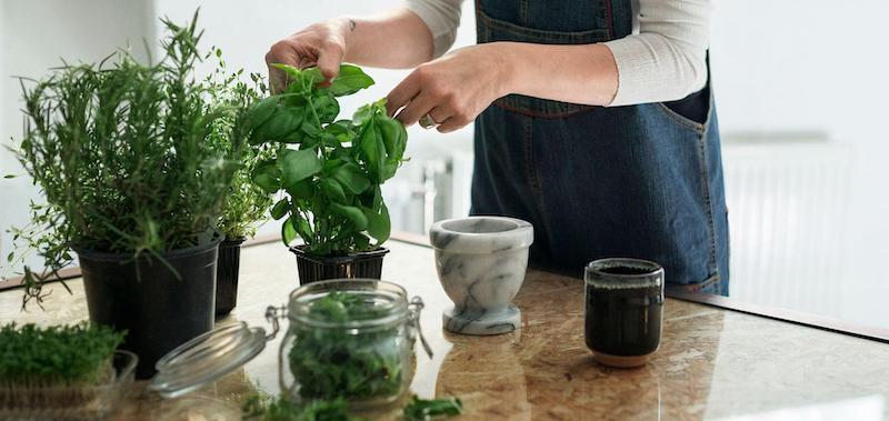 tutto sulle piante aromatiche