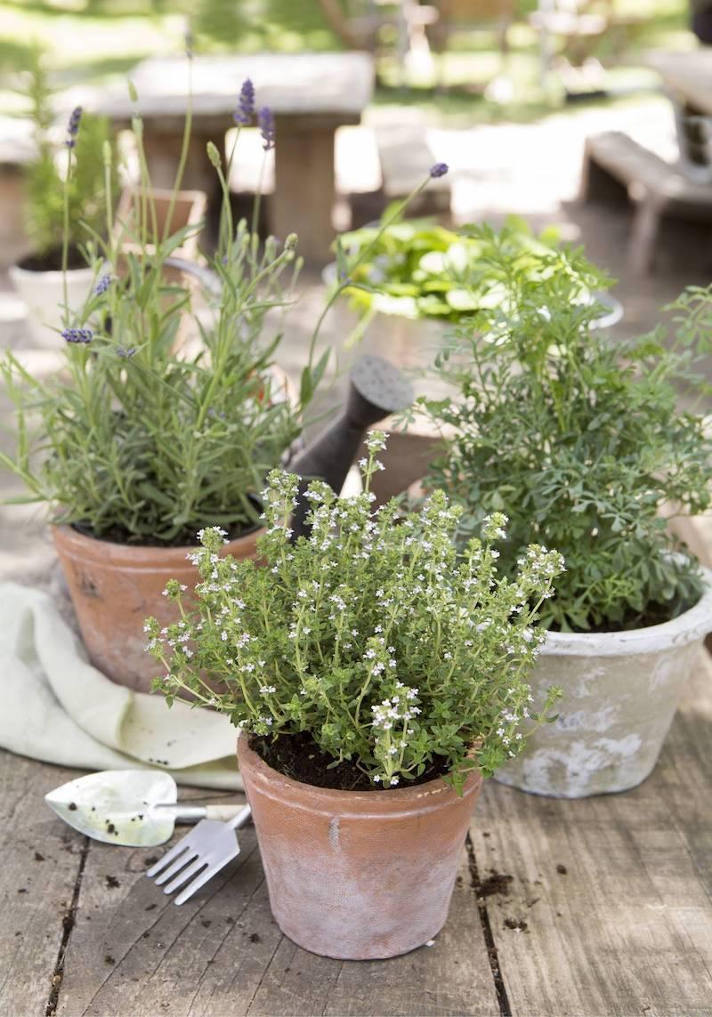 vasi con erbe aromatiche