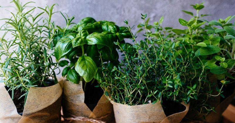 vasi per erbe aromatiche
